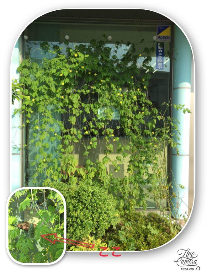 園芸倶楽部の観察日記14