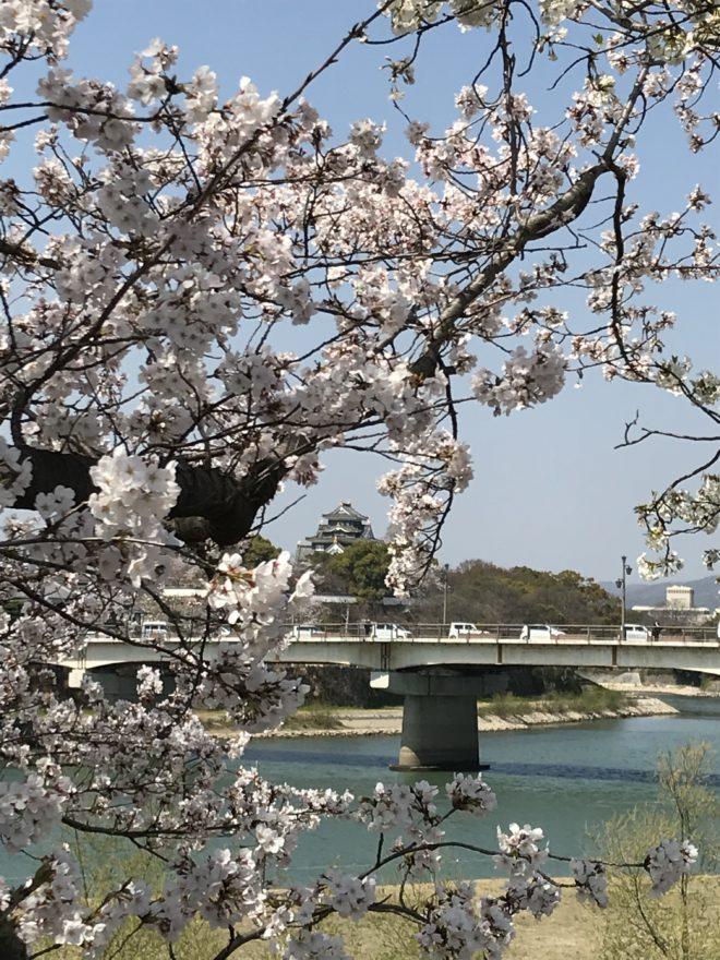 桜咲く…お花見シーズン到来